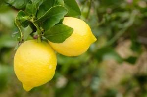 foto-limoni